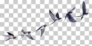 Barn Swallow Bird Flight Bird Flight PNG