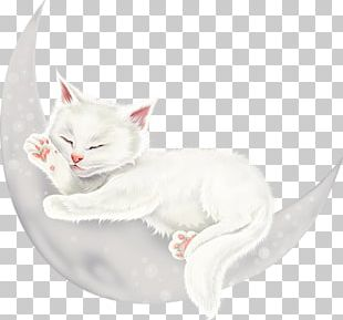 Kitten Whiskers Turkish Van Turkish Angora Domestic Short-haired Cat PNG