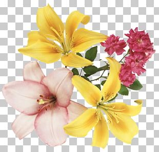 Festival Of The Flowers PNG