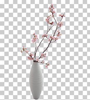 Vase Plum Blossom PNG