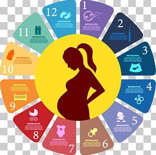 Pregnancy Childbirth PNG