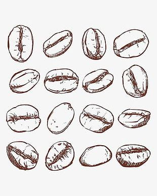 Coffee Beans Printing PNG