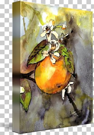 Still Life Photography Watercolor Painting PNG