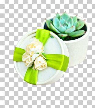 Wedding Succulent Plant Flower Marriage PNG