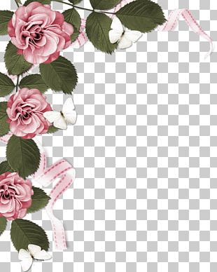 Rose Stock Photography Pink PNG