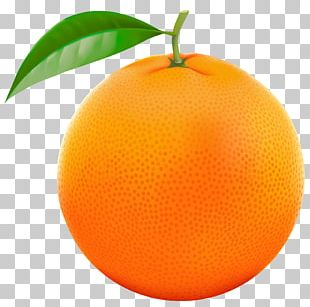 Grapefruit Orange Lemon PNG