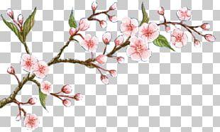 Cherry Blossom Flower Oil Soap PNG