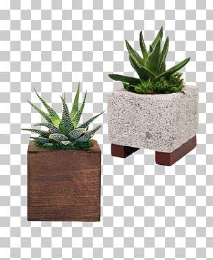 Agave Flowerpot Citroën Cactus M Houseplant INAV DBX MSCI AC WORLD SF PNG