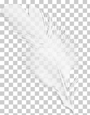 Black And White Feather Wing Pattern PNG