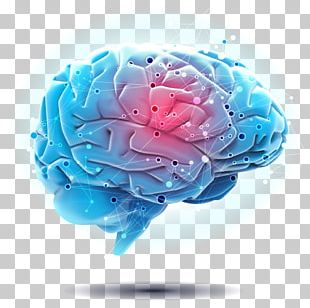 Engaging The Rewired Brain Autonomic Nervous System Psychology PNG
