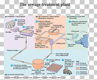 Microorganism Water Treatment Sewage Treatment Activated Sludge Wastewater PNG