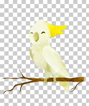 Owl Feather Beak Parakeet Pet PNG