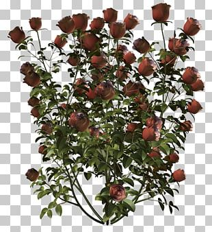 Floral Design Cut Flowers Flower Bouquet Branch PNG