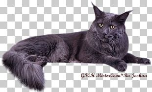 Maine Coon Nebelung Bombay Cat Asian Semi-longhair Black Cat PNG
