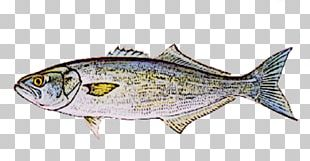Sardine Fish Products Mackerel Oily Fish Thunnus PNG