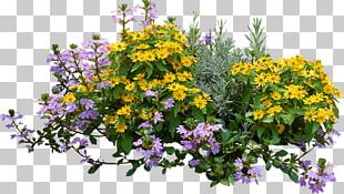 Flower Plant Shrub PNG