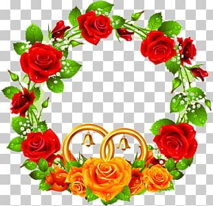 Red Rose Stock Photography PNG