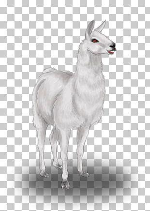 Llama Drawing Pack Animal Animal Husbandry PNG