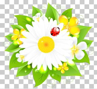 Common Daisy Drawing Flower PNG