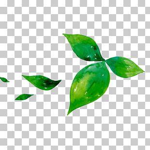 Green Tea Leaf Matcha PNG