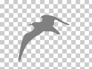 Bird Gulls Computer Icons Kittiwake PNG