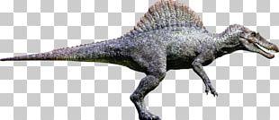 Spinosaurus Tyrannosaurus Giganotosaurus Ankylosaurus Carcharodontosaurus PNG