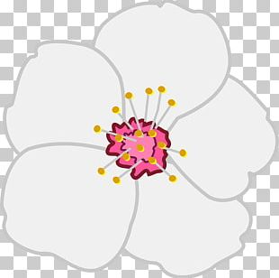 Blossom Drawing Apple Pencil PNG