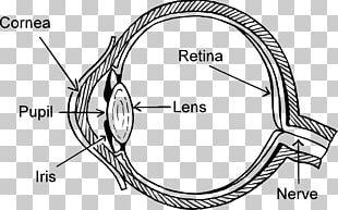 Eye Pattern Diagram Human Eye PNG