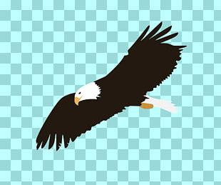 Bald Eagle Bird Of Prey PNG