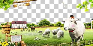 Sheep Cattle Farm Animal Husbandry Ranch PNG