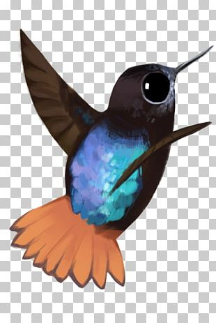 Hummingbird Fauna Beak Feather PNG