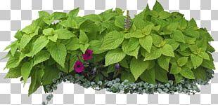 Flower Garden Leaf Shrub Garden Design PNG