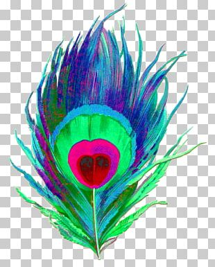 Feather Peafowl Bird PNG