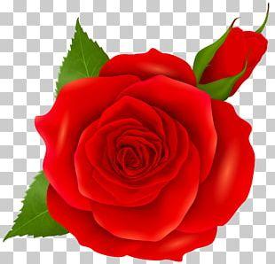 Rose Pink PNG
