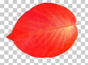 Leaf Illustration PNG