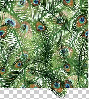 Bird Light Feather Peafowl Euclidean PNG