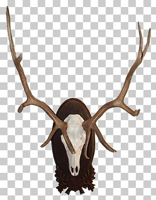 Red Deer Elk Moose Antler PNG