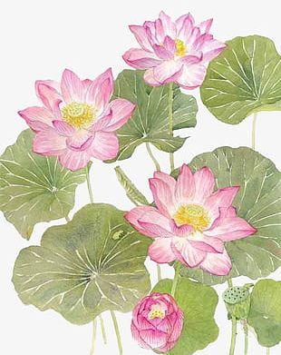 Watercolor Lotus PNG