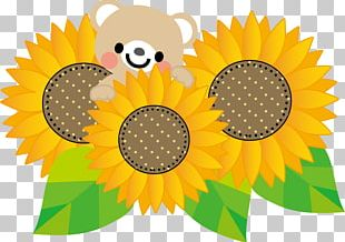 Computer Icons Common Sunflower Skin Care PNG