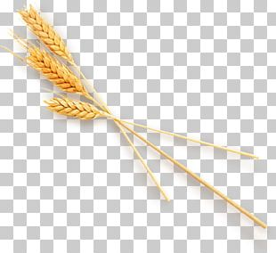 Wheat Computer File PNG