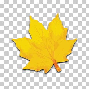 Sugar Maple Maple Leaf Yellow PNG