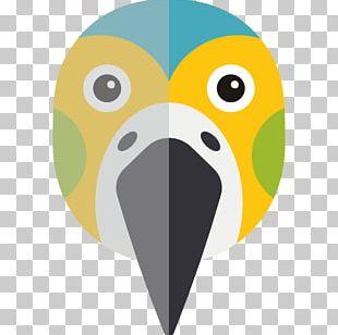 Koala Zoo Animal True Parrot Pet PNG