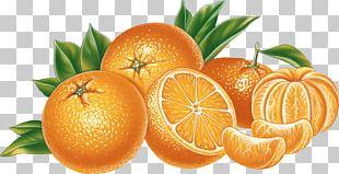 Citrus × Sinensis Orange PNG