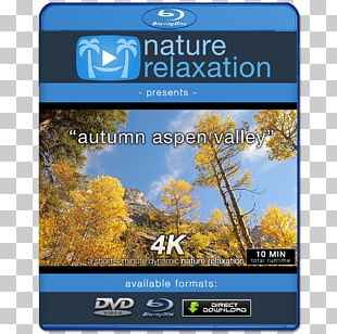 4K Resolution 1080p Ultra-high-definition Television Display Resolution PNG