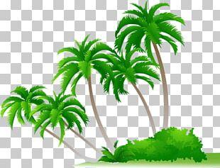 Arecaceae Shrub PNG
