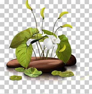 Flower Floral Design Herbalism Floristry PNG