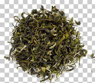 Darjeeling Tea Sencha White Tea Oolong PNG