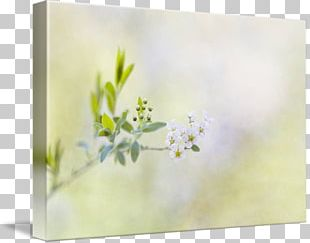 Still Life Photography Watercolor Painting Floral Design Frames PNG