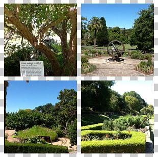 Nature Reserve Flora Park Vegetation Botanical Garden PNG