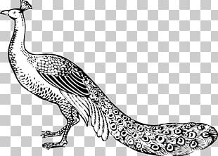 Bird Peafowl Black And White PNG